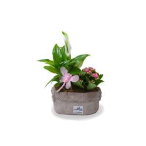 SMALL PARADISE PLANTS